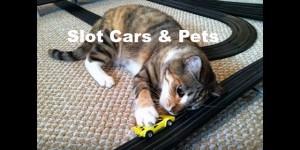 slot-car-pets