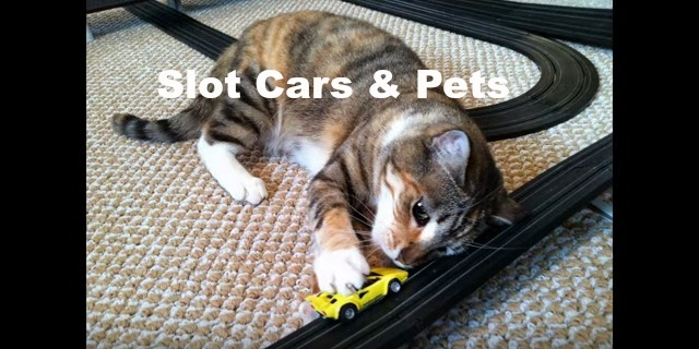 Slot Cars & Pets
